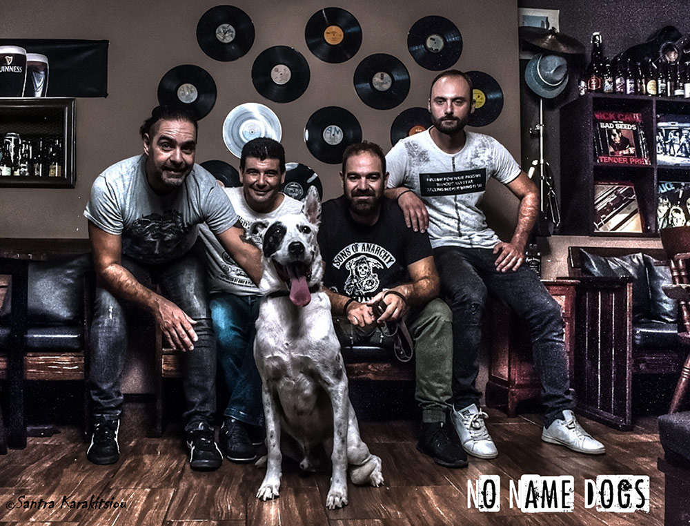 No-Name-Dogs